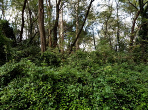 Bosque Ría Solia