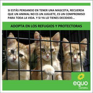 Foto gatitos esperando adopción