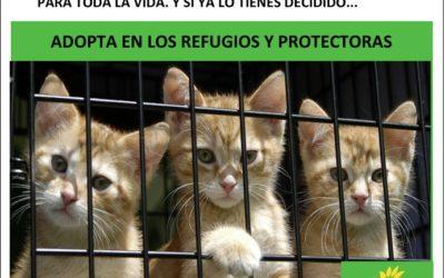 EQUO SUMA A LA LEY DE PROTECCIÓN Y BIENESTAR ANIMAL