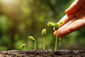 Manos regando una planta pequeña