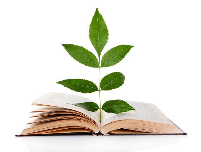 Libro con árbol saliendo del las páginas abiertas
