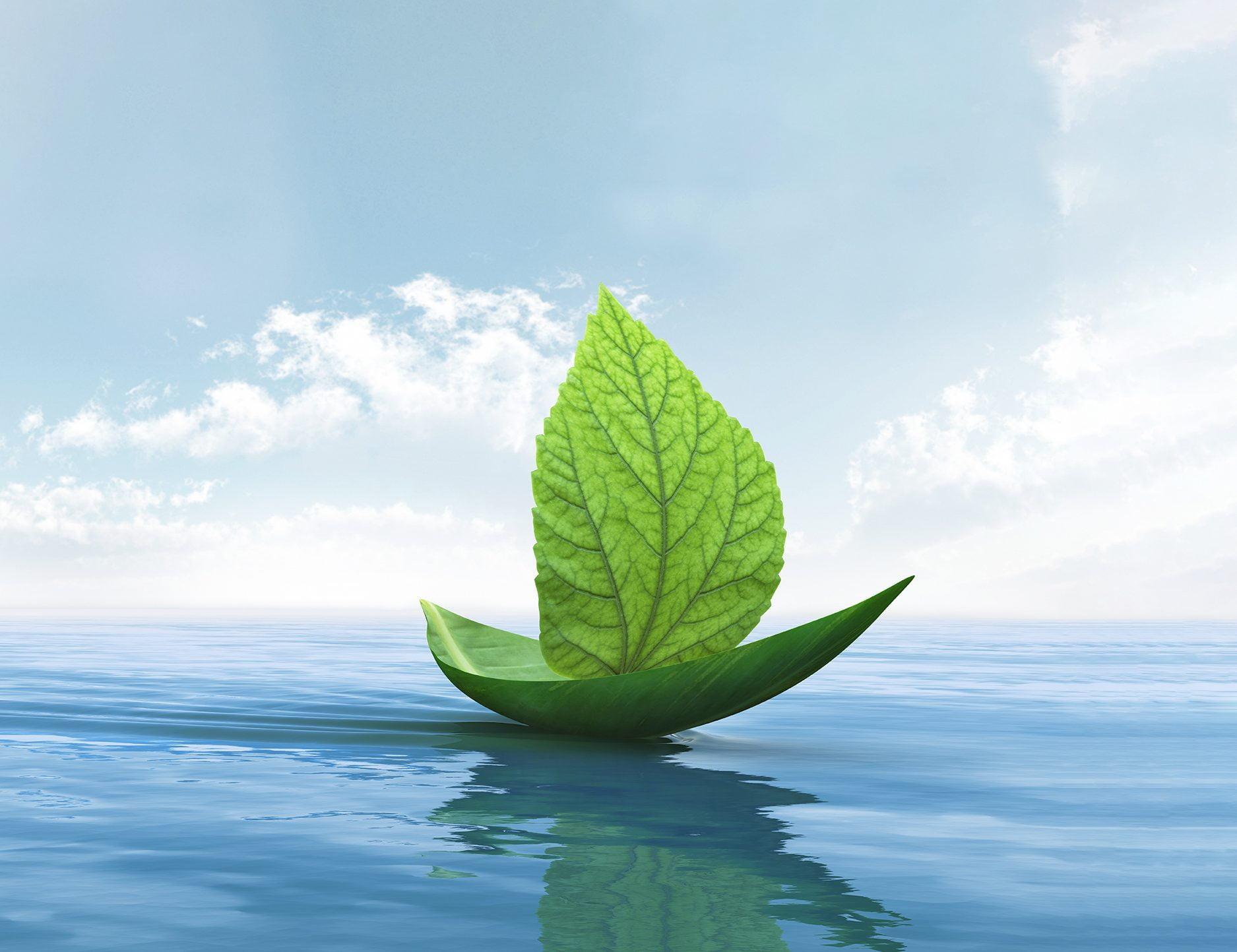 Navegando la Ola Verde
