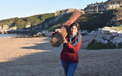 Se retiran más de 50 sacas de la planta invasora Onagra de  las dunas de Marzán